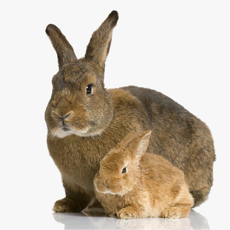 bunnies volunteer